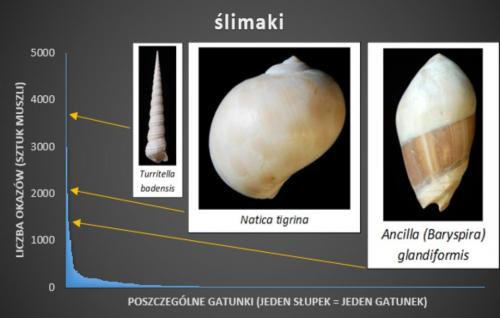 Relacja gatunków ślimaków w Korytnicy