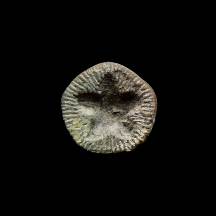 Liliowiec nieoznaczalny (Pentagonostipes petaloides nom. conf.)