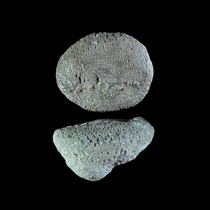 Heliolites interstinctus