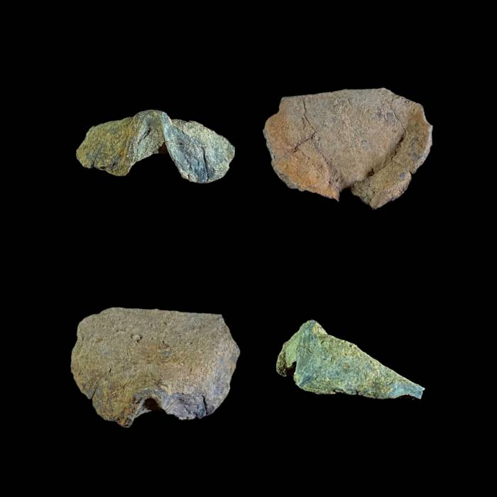 Leptodontella caudata
