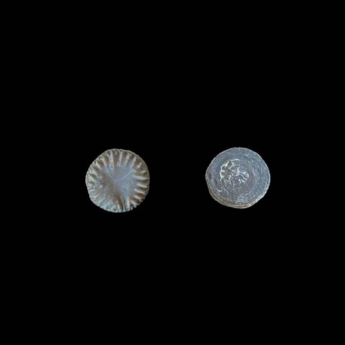 Microcyclus eifeliensis
